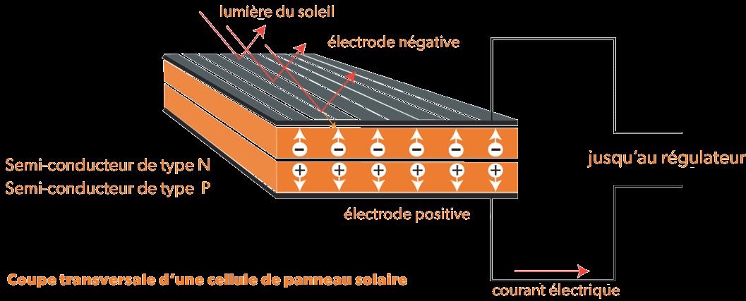 Coupe transversale d'une cellule de panneau solaire